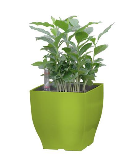 Samozavlažovací kvetináč G21 Cube mini zelený 13.5 cm