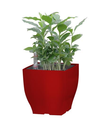 Samozavlažovací kvetináč G21 Cube mini červený 13.5 cm
